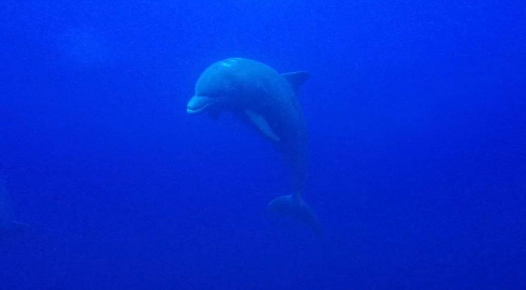 swimming with dolphins puerto vallarta